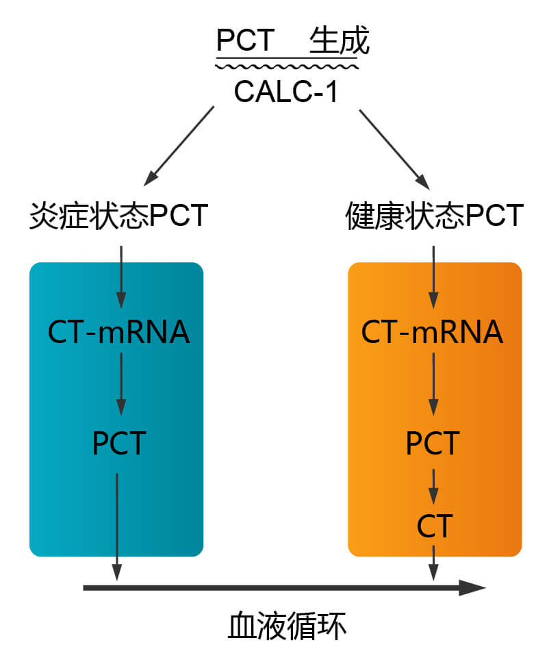 降钙素原(PCT)在炎症与非炎症体内的变化
