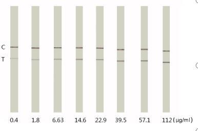 C反应蛋白K1016-K1017胶体金试纸条